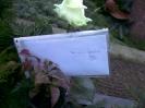 3.Advent 2007 Ein Brief von Deiner Lieblingsazubine Nadine